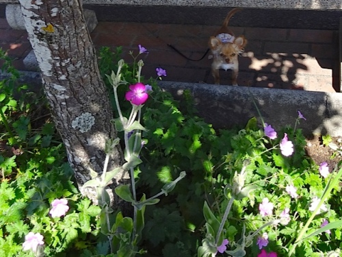 Allan's photo of an adorable little dog who was NOT in a tree garden.