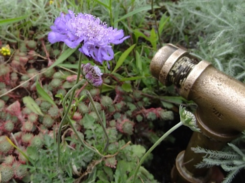 our watering bayonet (Allan's photo)