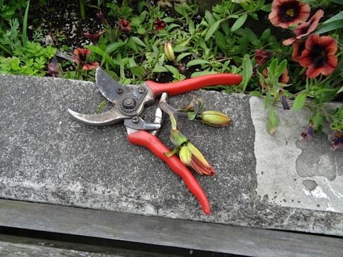 the broken off flowers