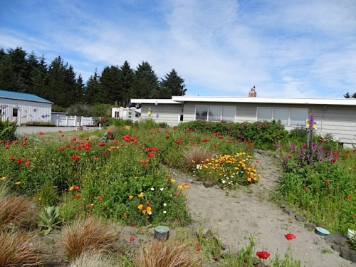 west side of house and office, and poppies