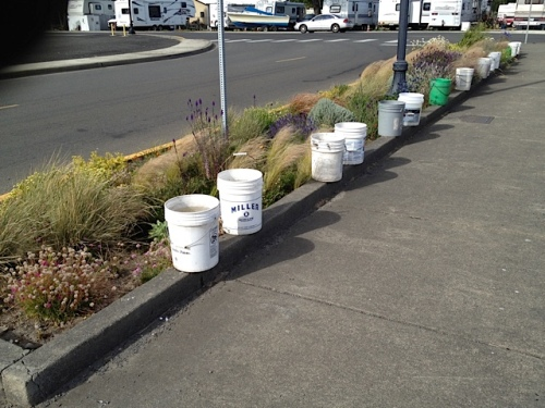 round one: buckets lined up to dump