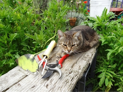So is Mary, by the gardening tools I had set out for later.