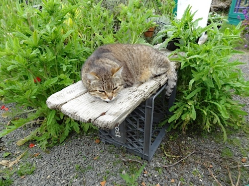 Mary was snoozing in her new favourite spot, a temporary plant holding bench on the back patio.