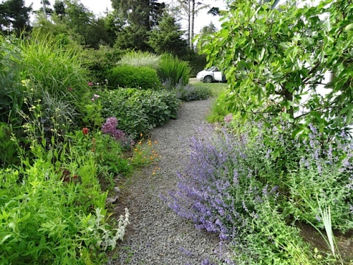 north view with catmint  sprawling on the path