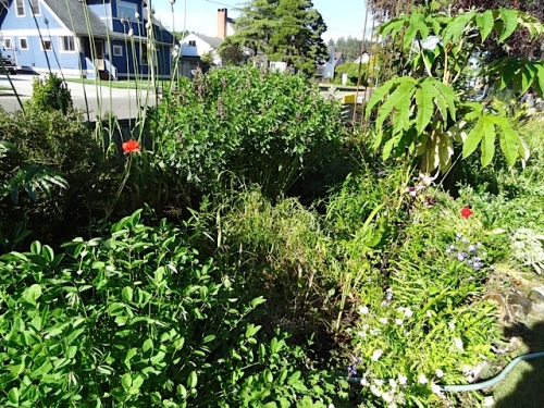 That wilty plant in the middle is a white sanguisorba.