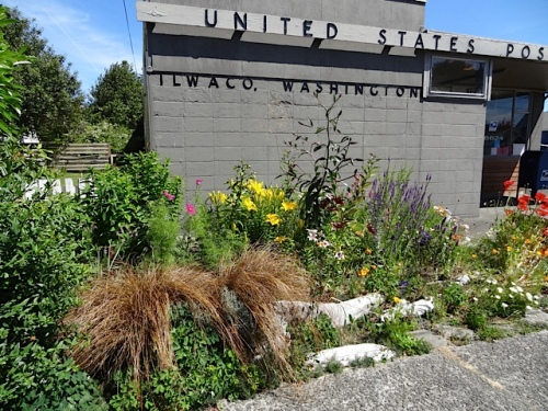 the Ilwaco Post Office garden...