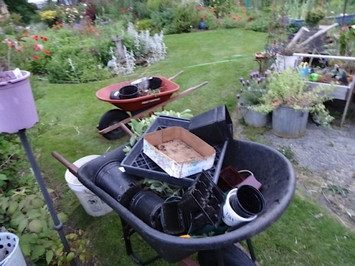 wheelbarrows full of empty pots