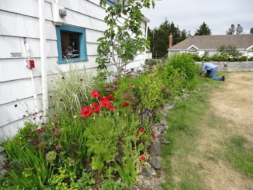 the garden shed garden