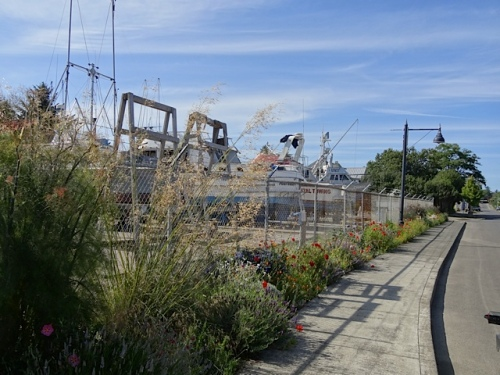 boatyard garden with Stipa gigantea
