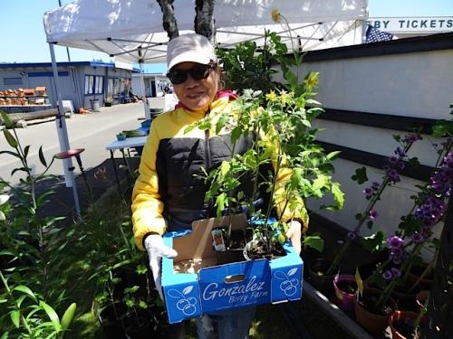 Saturday market plant vendor