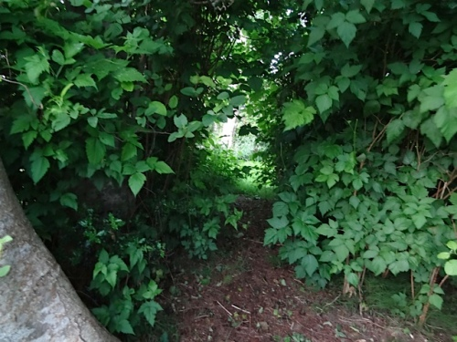salmonberry tunnel needs re-cutting