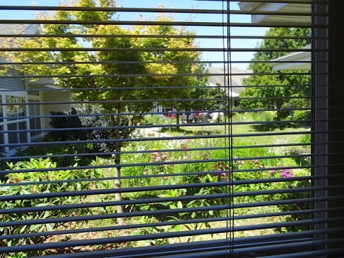 And there is a garden view from the back hallways window.