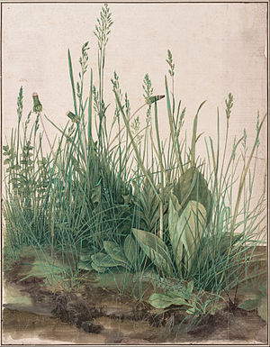 300px-Albrecht_Dürer_-_The_Large_Piece_of_Turf,_1503_-_Google_Art_Project