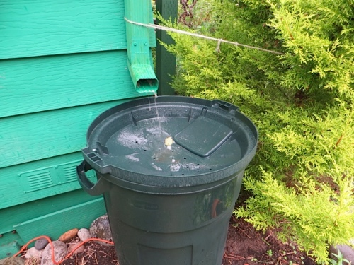checking out the rain barrels