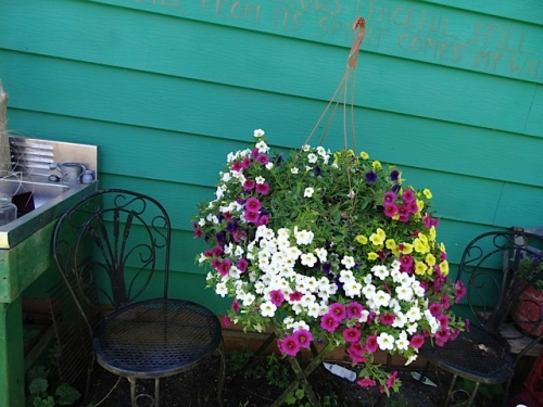 hanging basket down