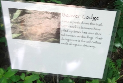 (Sorry all blurry, and the beaver lodge was too shady to photograph.)