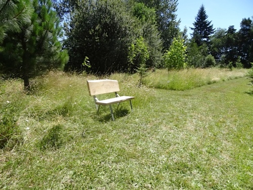 Warbler Tree Bench