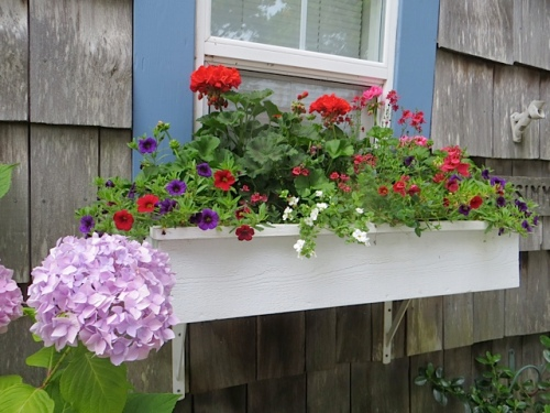 guest cottage windowbox