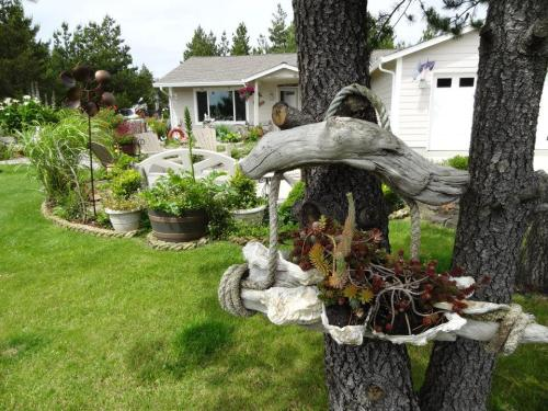 driftwood and shell planter