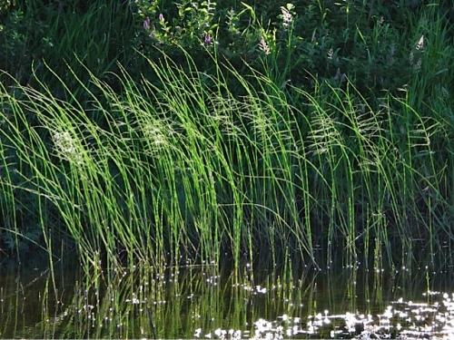 Nature's grass-scape