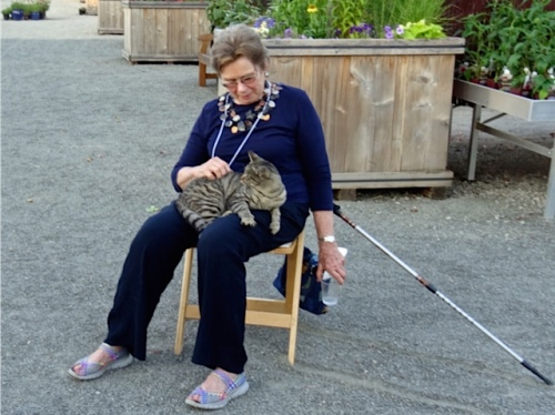 Allan's photo: An audience member was chosen by a nursery cat.