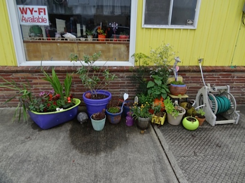 Allan photographed the cute container garden at the Portside Café.