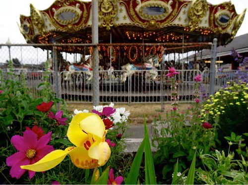 Allan's photo: tigridia by the carousel