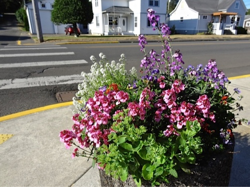 Allan's photo: the planter by the fire station