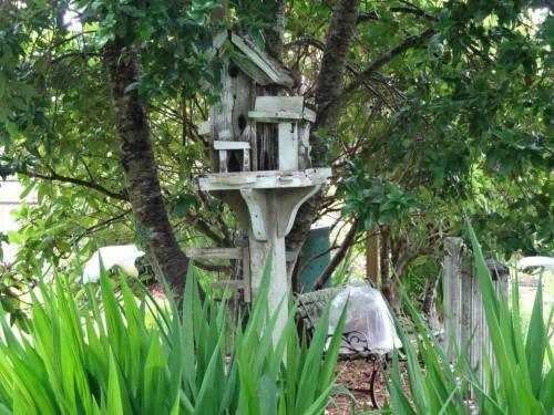 another bird feeder