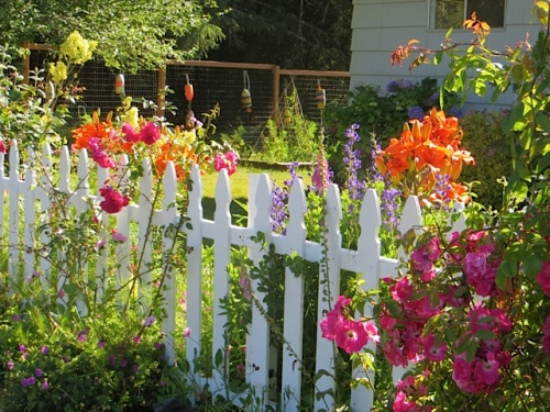 old fashioned wooden picket fence