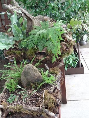 tiered fern planter near front door