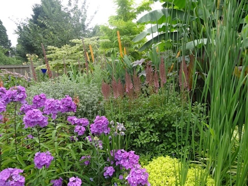 the solidly floriferous side of the garden
