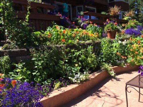 our friend Shelly of Flowering Hedge Designs helped with the flower planting by the deck and patio.  Photo by Shelly Hedges.