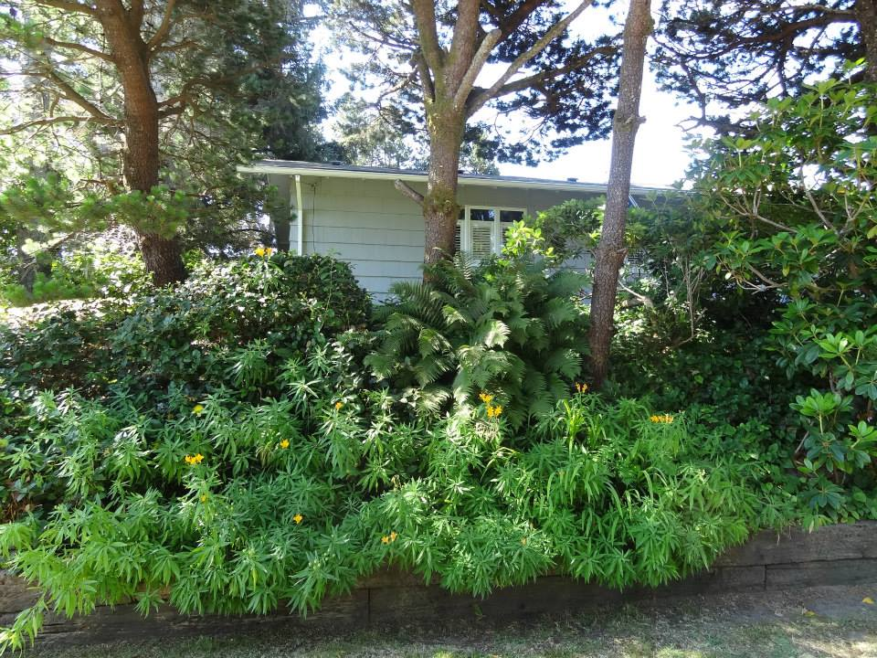 The day was already hot, so the greenery and shade of the front garden was restful to the eyes.