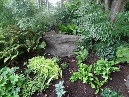 front garden ferns