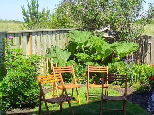 Gunnera in the triangle corner of the garden
