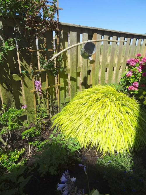 The little watering can is a clever reference to the flowing shape of Hakonechloa macra 'Aureola'.