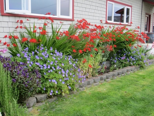 west side, Gene and Peggy's planting of Crocosmia