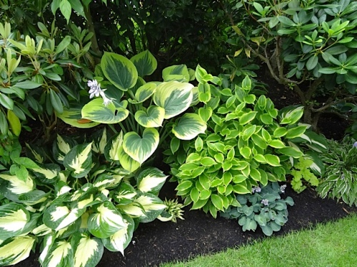 Jeanne and I marveled at the perfection of the hostas.