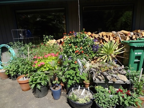 the lower side of the house: a collection of plants