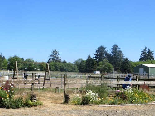watering the Red Barn Arena garden