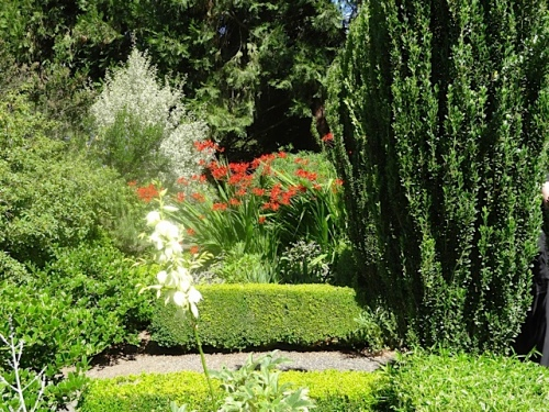 exuberant plants contained within the knot garden