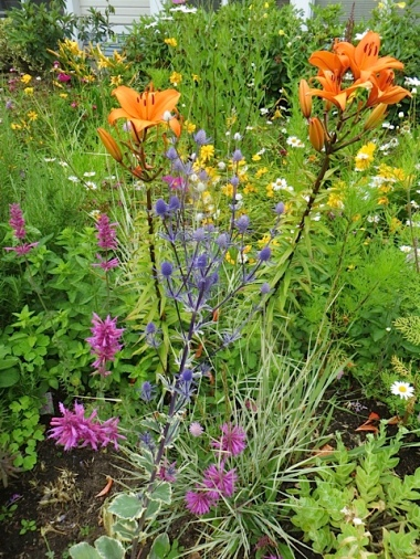 orange lilies and Eryngium 'Jade Frost'