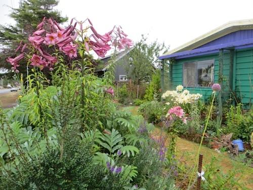 a damp front garden