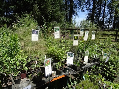 in a side yard: native plants for sale...