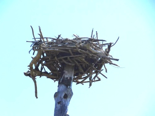 Crafted by the previous owners of the property, this sturdy nest has been up there for years.