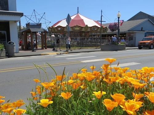 California poppies and carousel