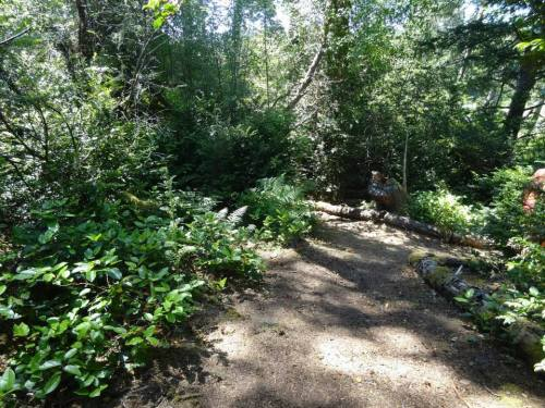 The woodland paths have been extended and refined by local gardener Sara Zaga.