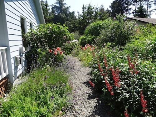 I spent my time mostly weeding the gravel path.  It was HOT work.