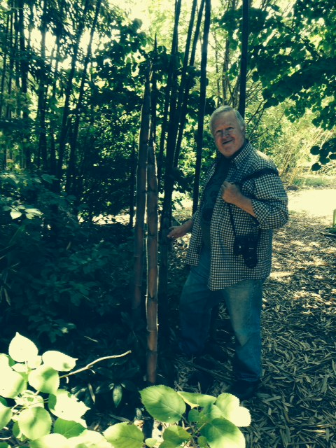 "Nancy's Phil, with ""gorgeous, deep green bamboo""."